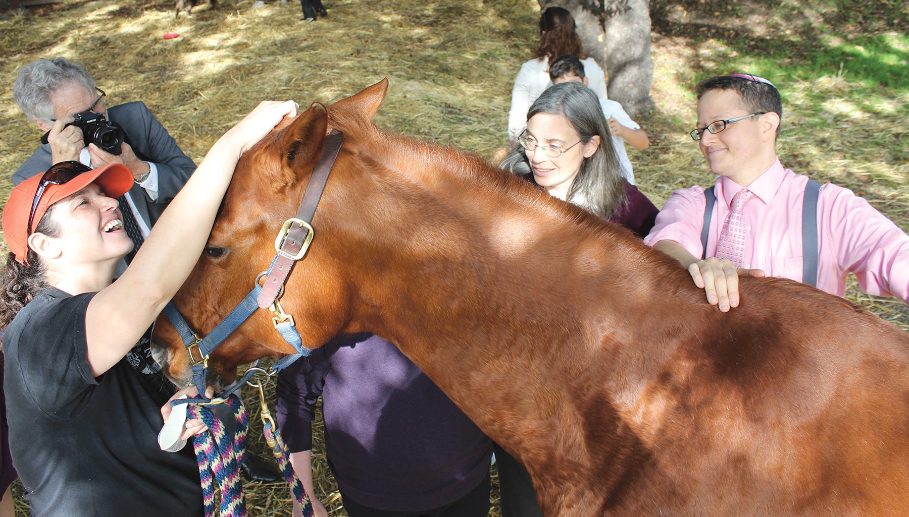 the rabbis lay their hands on a horse