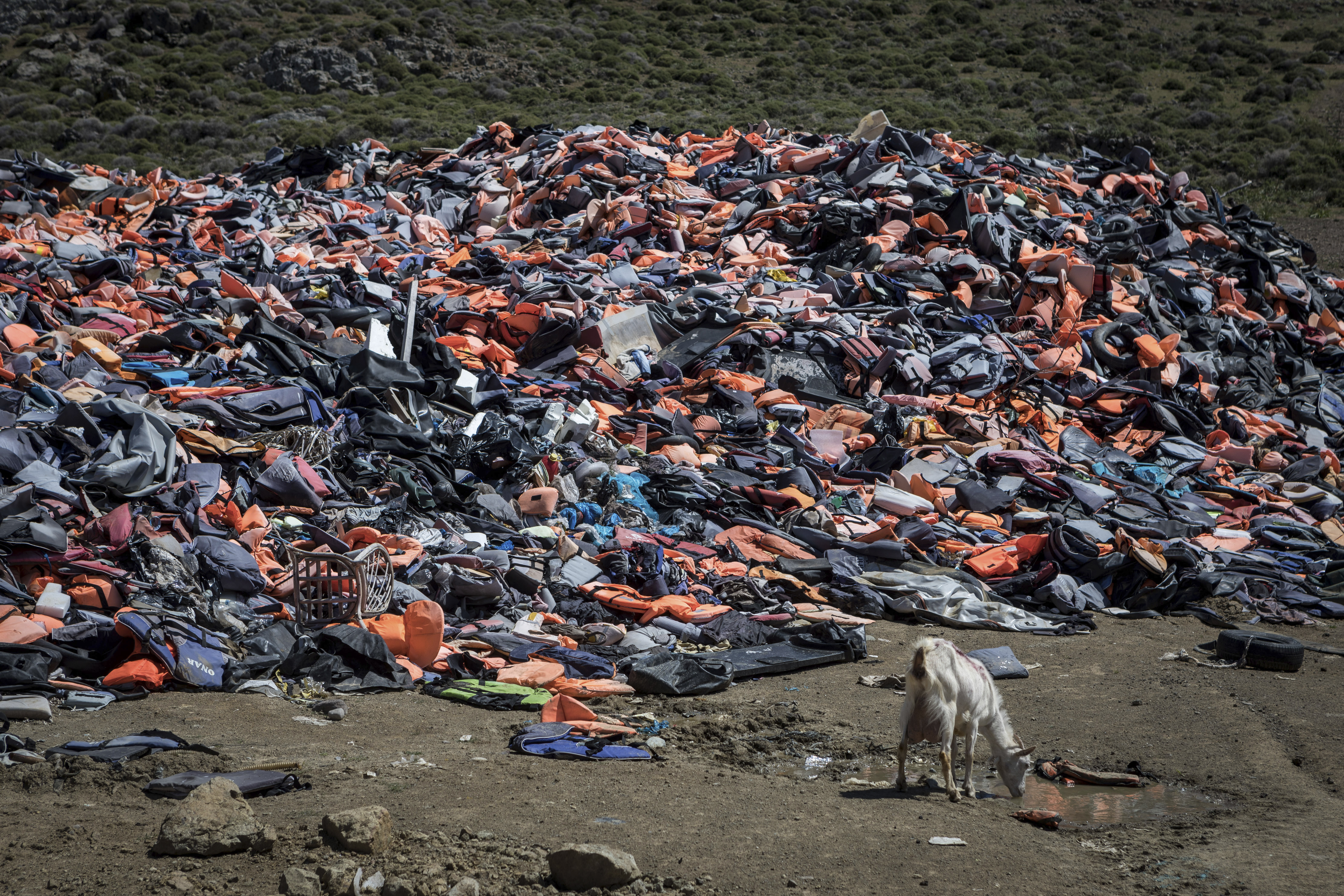 a huge pile of life jackets on a beach -- a goat stands nearby