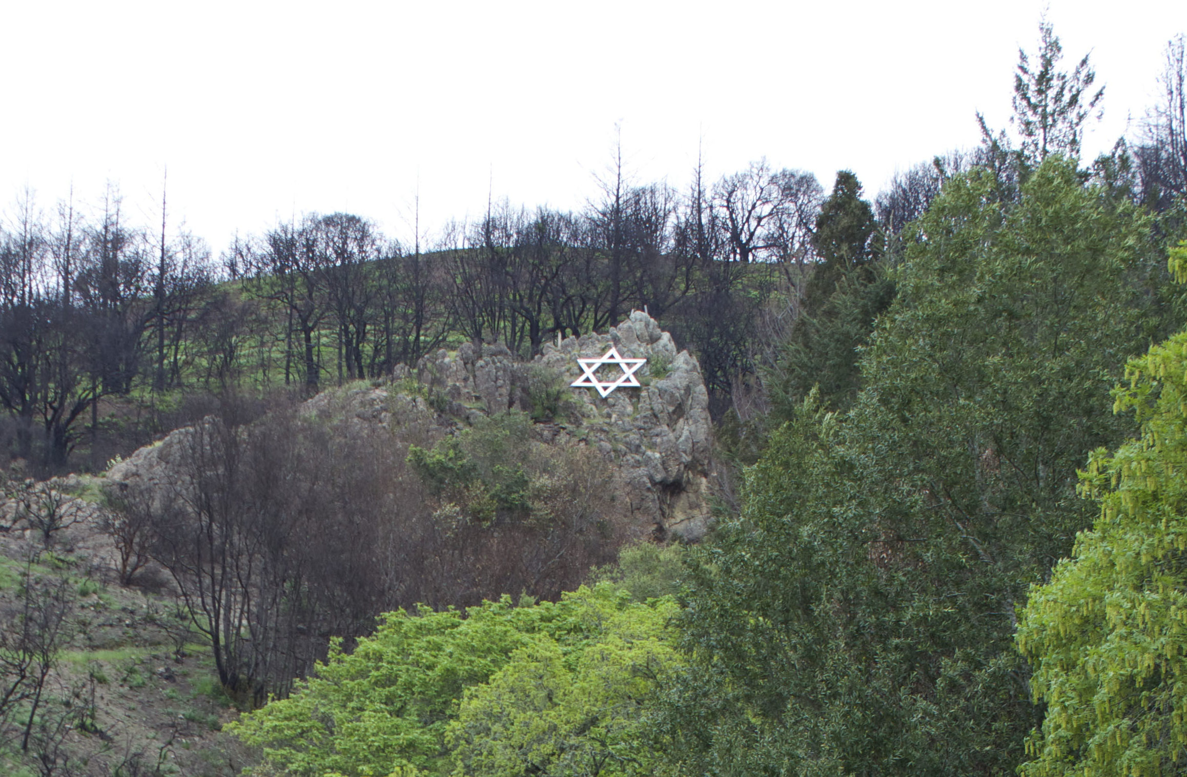 The iconic Star of David that sits on a hillside over Camp Newman was surrounded by blackened remains six months ago. But now: signs of life. (Photo/Rob Gloster)