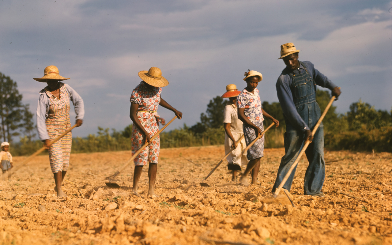 four women and one man toil in a field of dirt