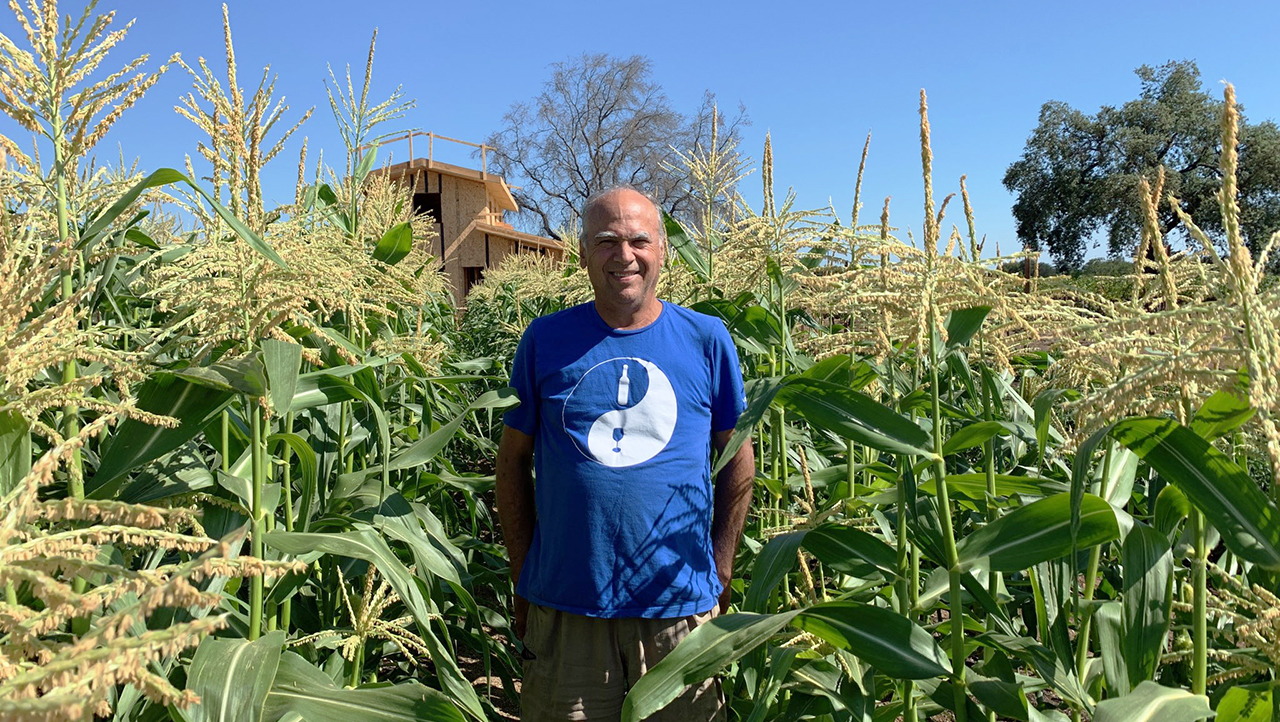a bald man in a blue t-shirt standing in a field of green stalks that reach over his head