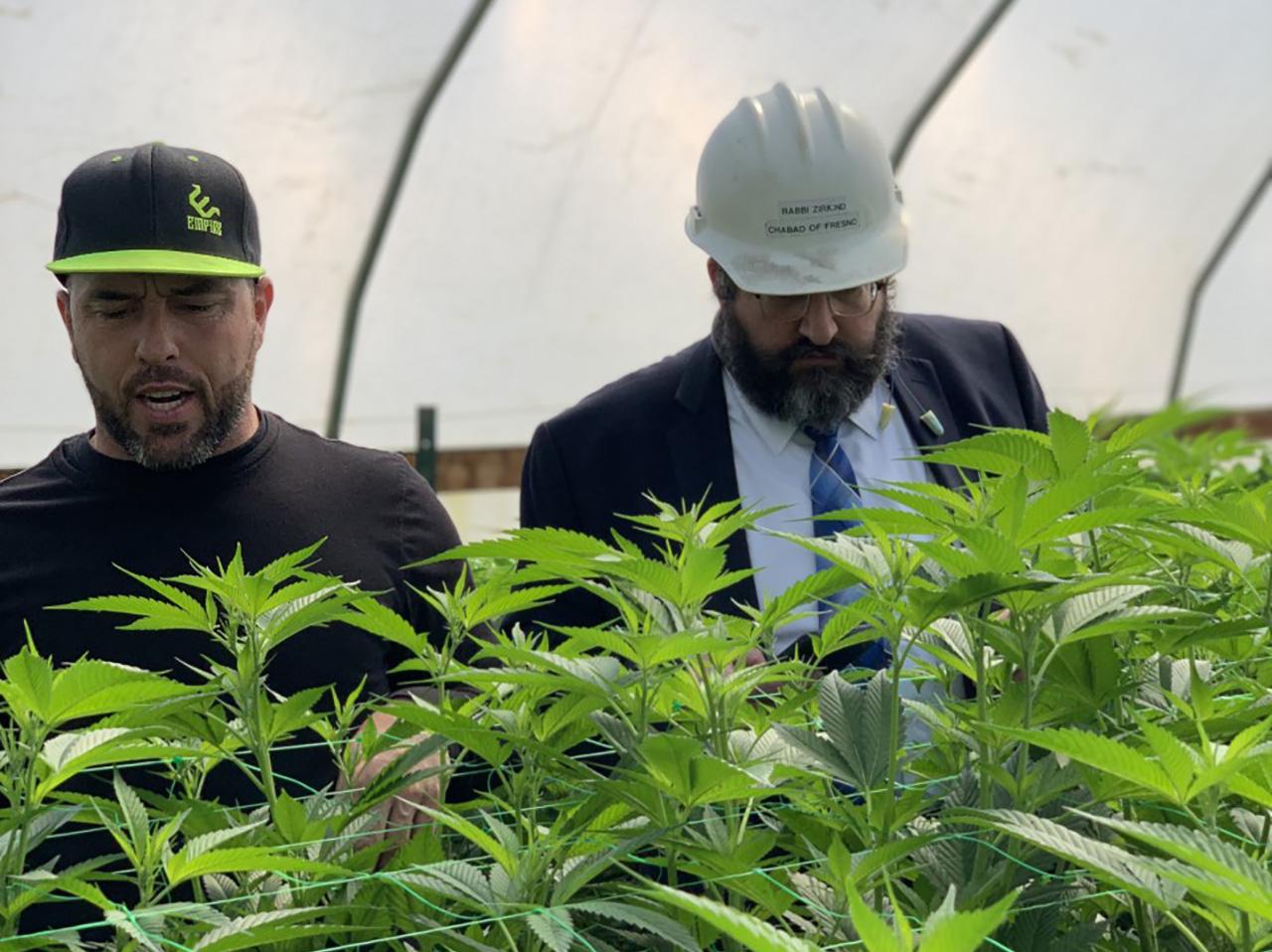 Cali Kosher owner Darron Silva (left) looks over his crop with Rabbi Levy Zirkind. (Photo/Courtesy Cali Kosher)