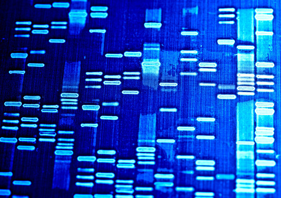 A visualization of DNA sequences. (Photo/Shutterstock-Isak55)