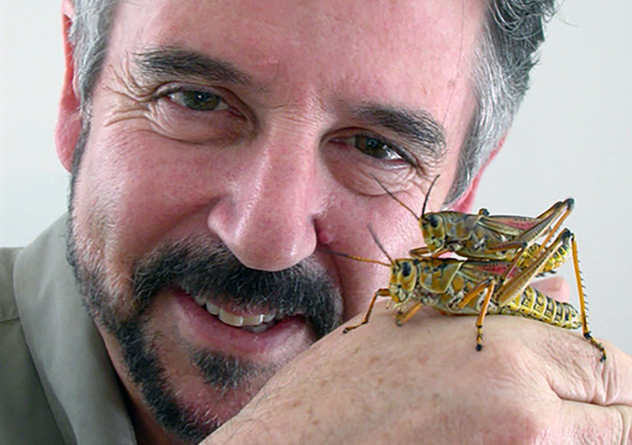 """Norm Gershenz with male and female Eastern lubber grasshoppers """"mate guarding."""""""