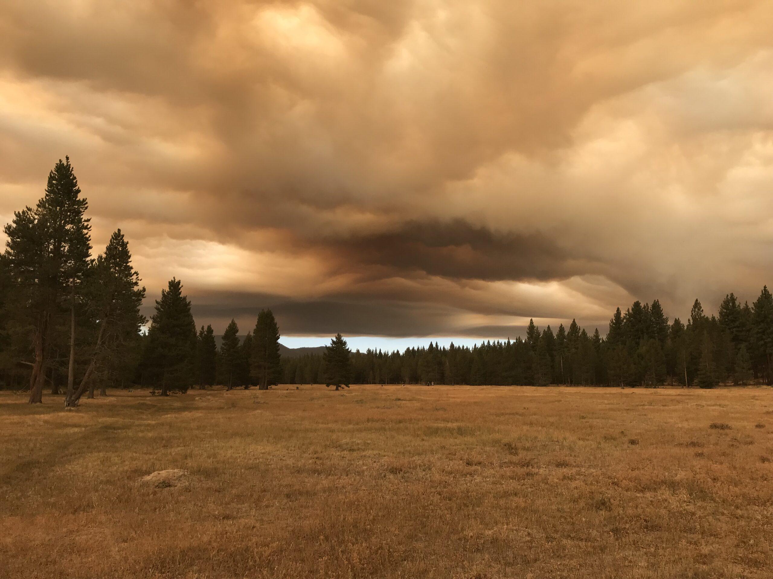 A meadow near Patricia Sussman's home in the Bijou neighborhood of South Lake Tahoe, Aug. 17, 2021.